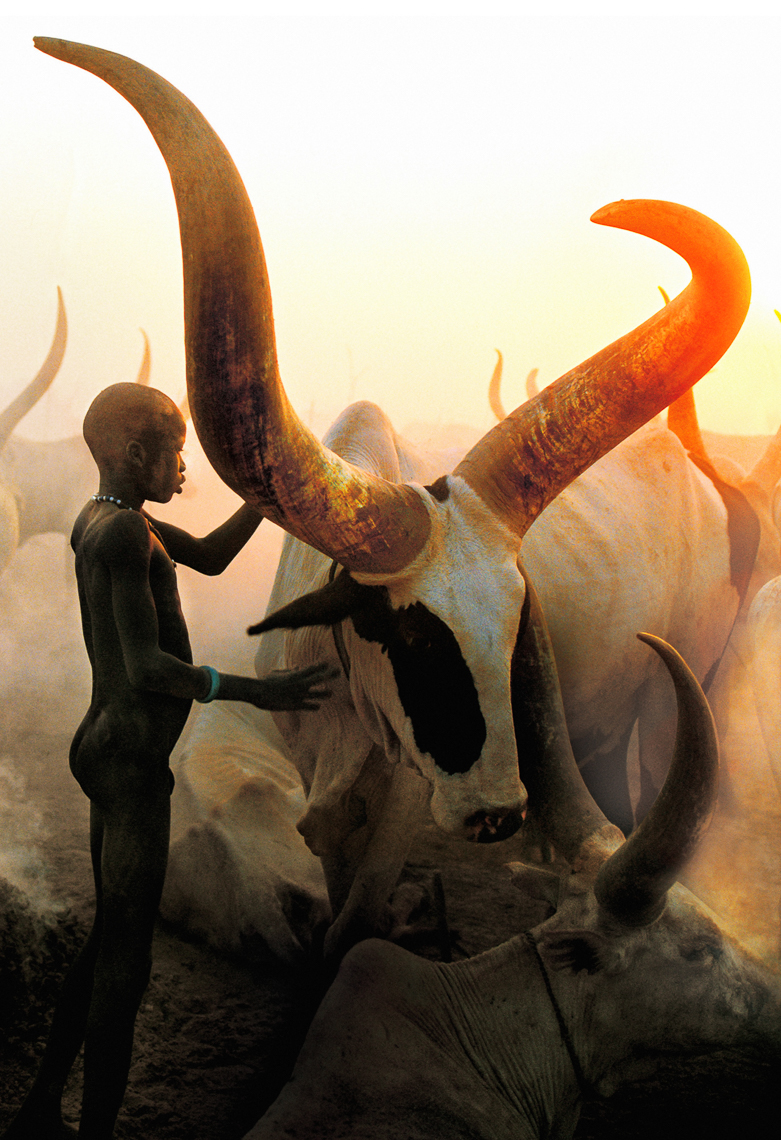 Dinka Boy with Long Horned Bull