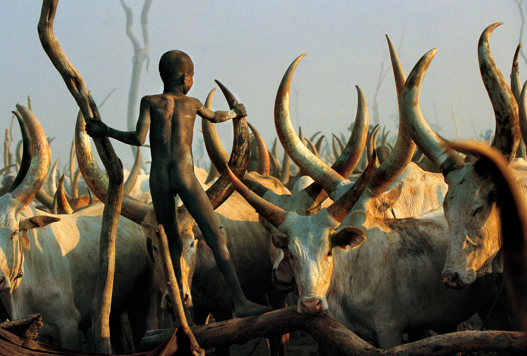 Dinka Child Climbing Among the Horns, South Sudan