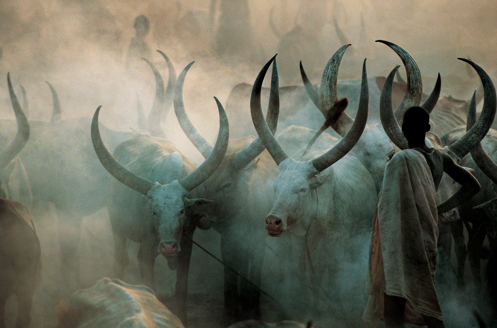 Dinka Cattle in Smoke, South Sudan