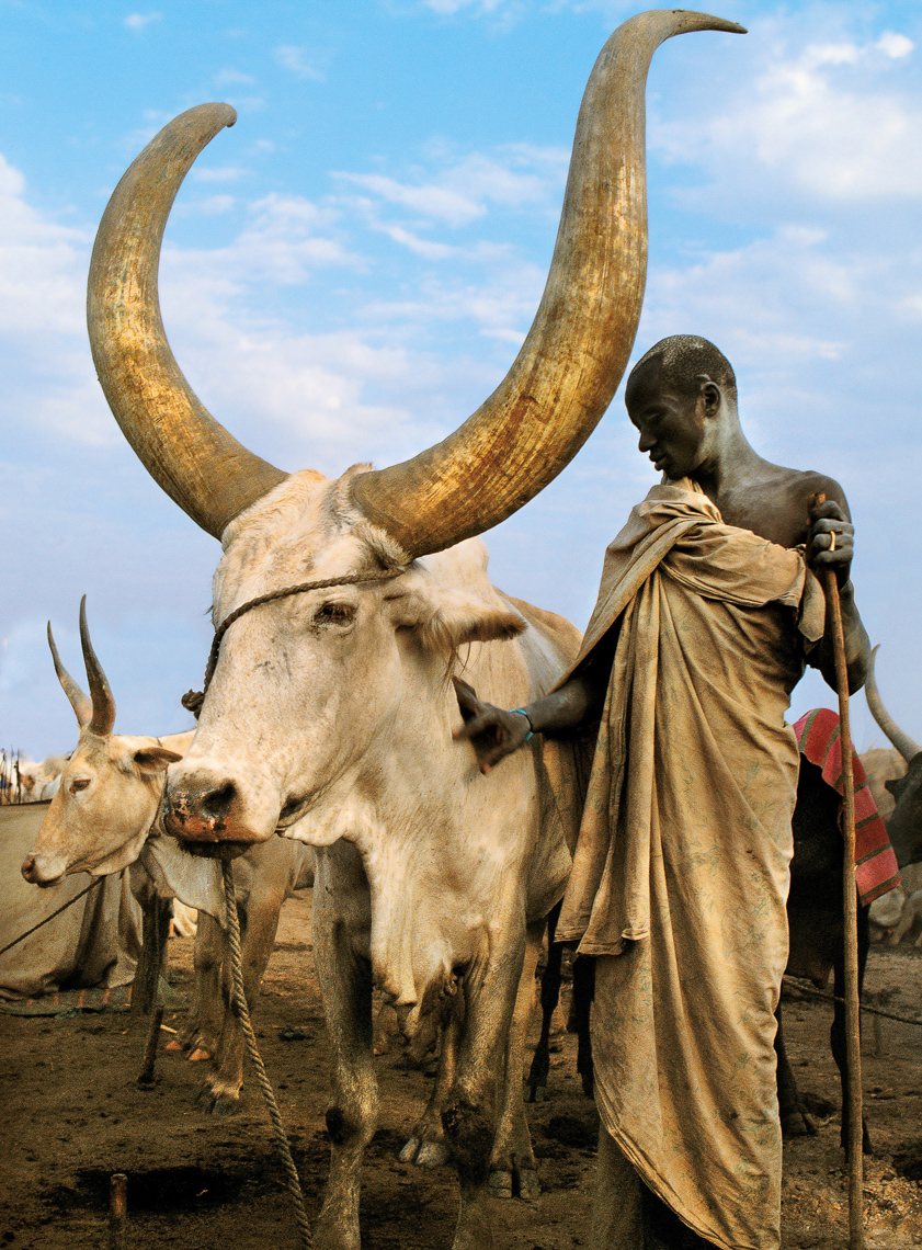 Dinka Man with White Bull, South Sudan