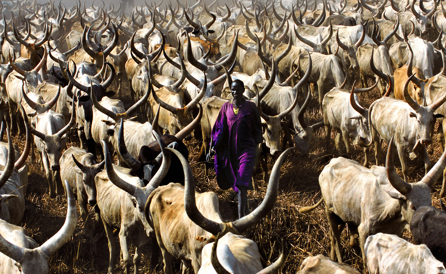 Dinka Herder in Purple Robe, South Sudan