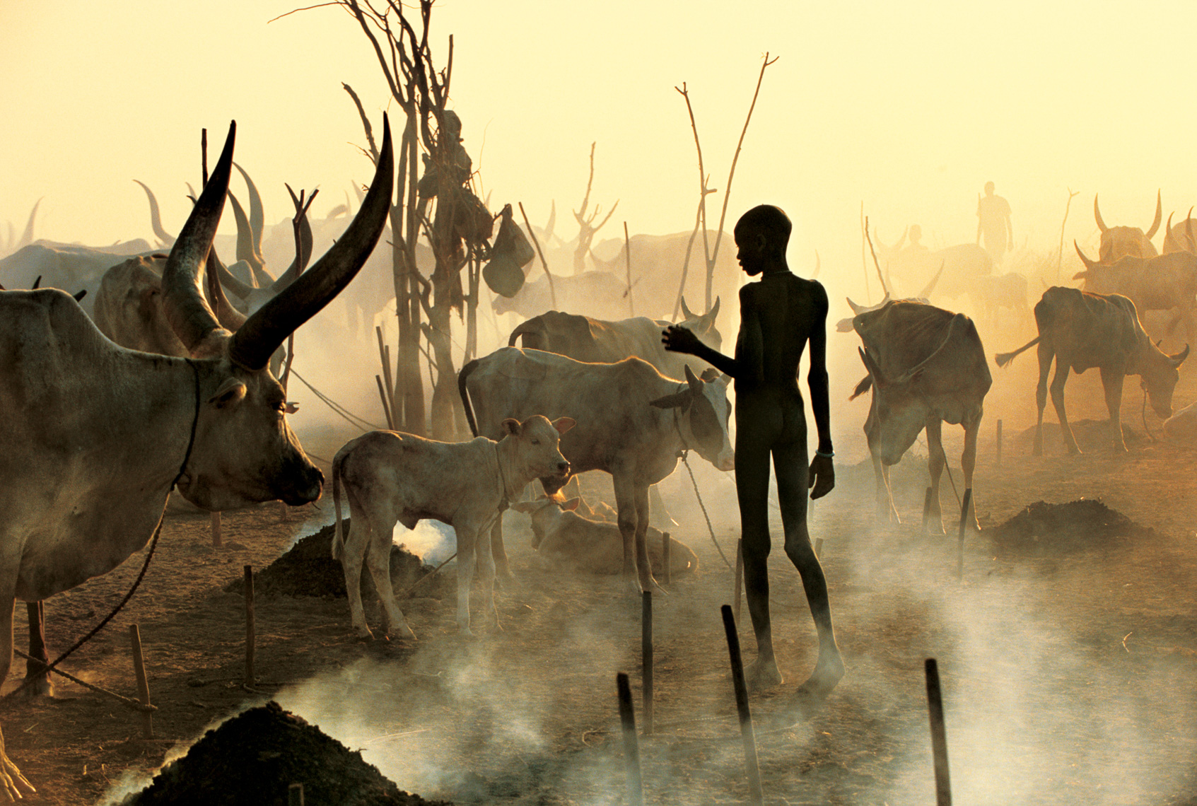 Dinka Boy Tending Cattle, South Sudan