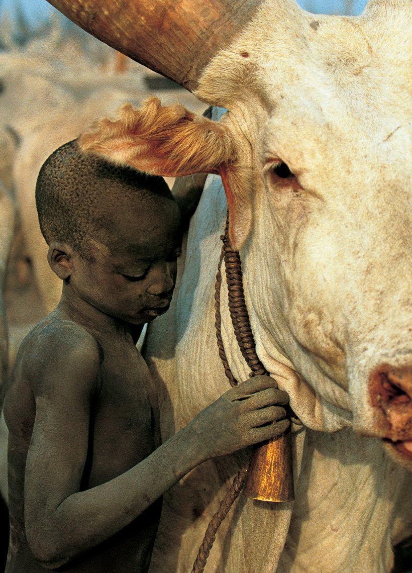 Dinka Child and White Bull, South Sudan