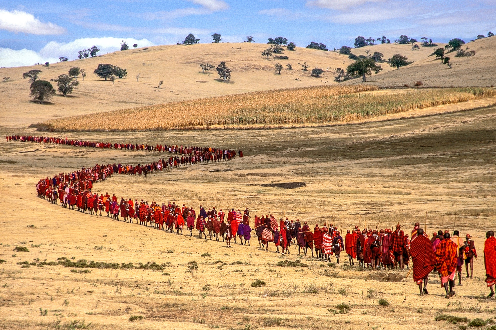 Salei Maasai Warriors approach the Ceremonial Manyatta, Tanzania