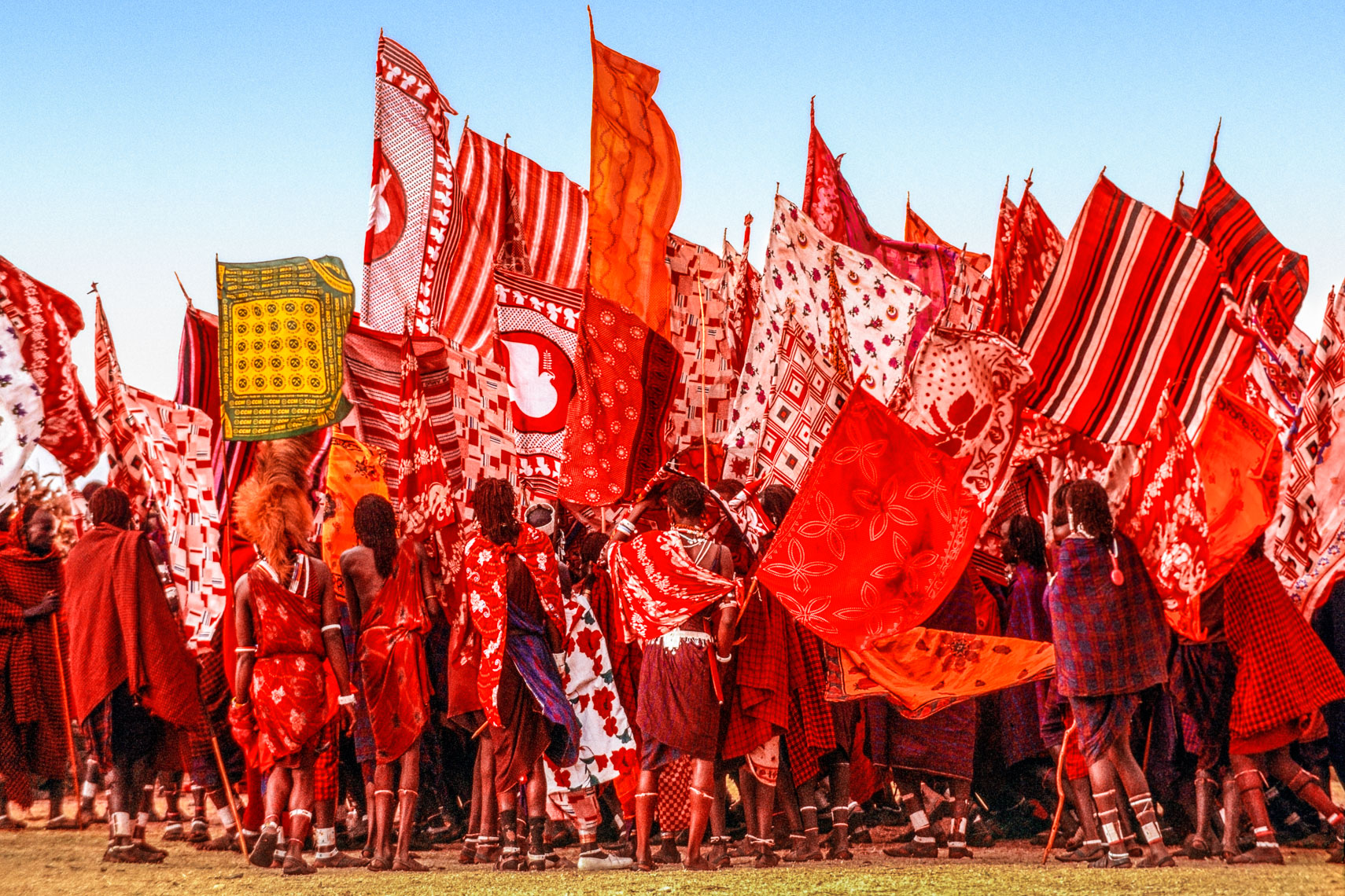 Salei Maasai Warriors Bearing Flags, Tanzania